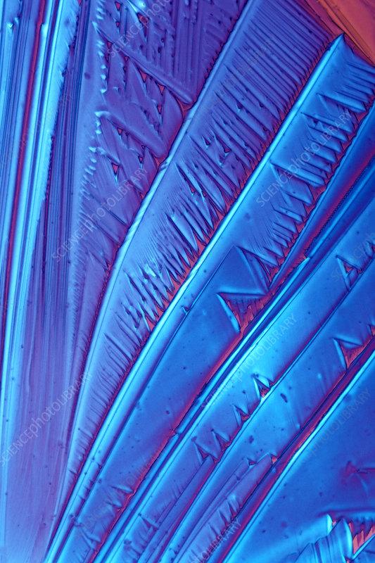 Tartaric acid crystals polarized view. LM