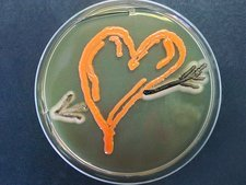 Love, microbial art