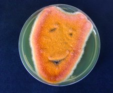 Comedy mask, microbial art
