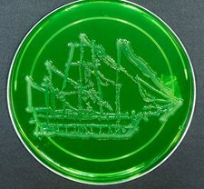 HMS Beagle, microbial art