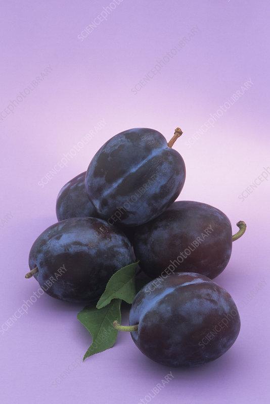 Plums (Prunus)