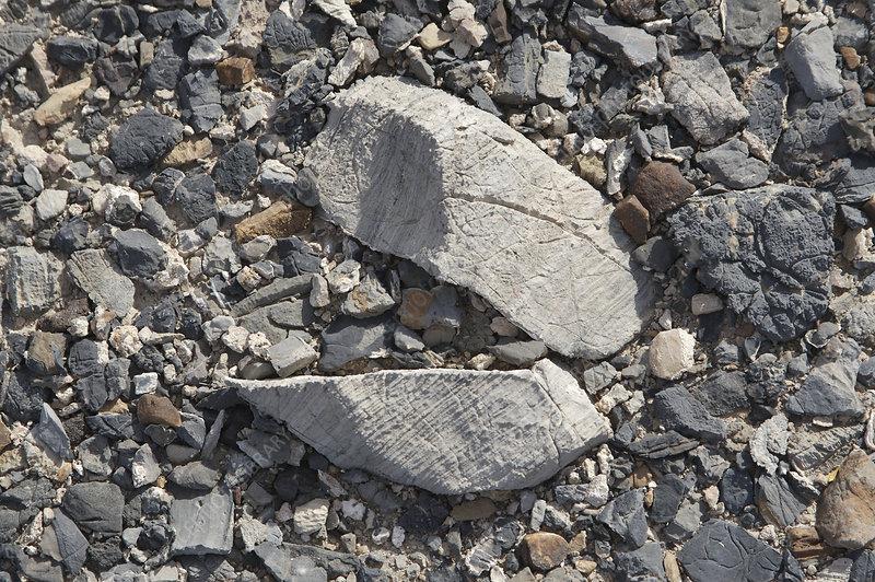 Ventifacts and desert pavement