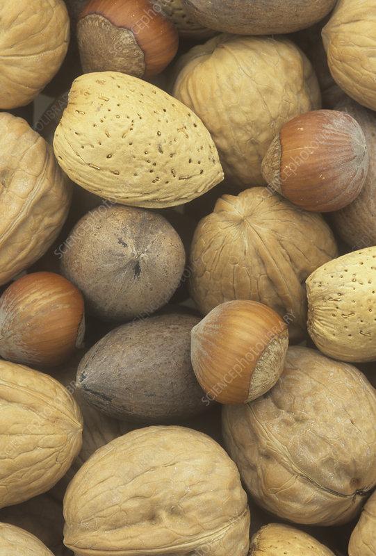Nuts, pecan, walnut, hazel and almond