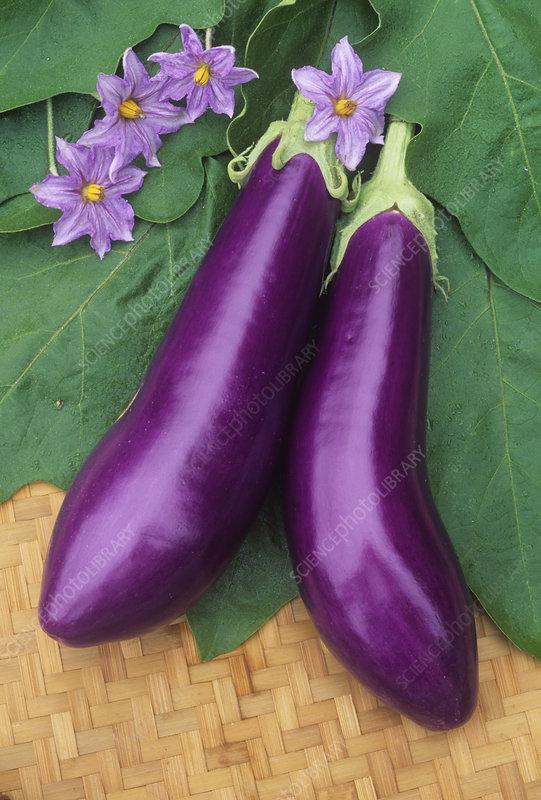 Eggplant, Neon