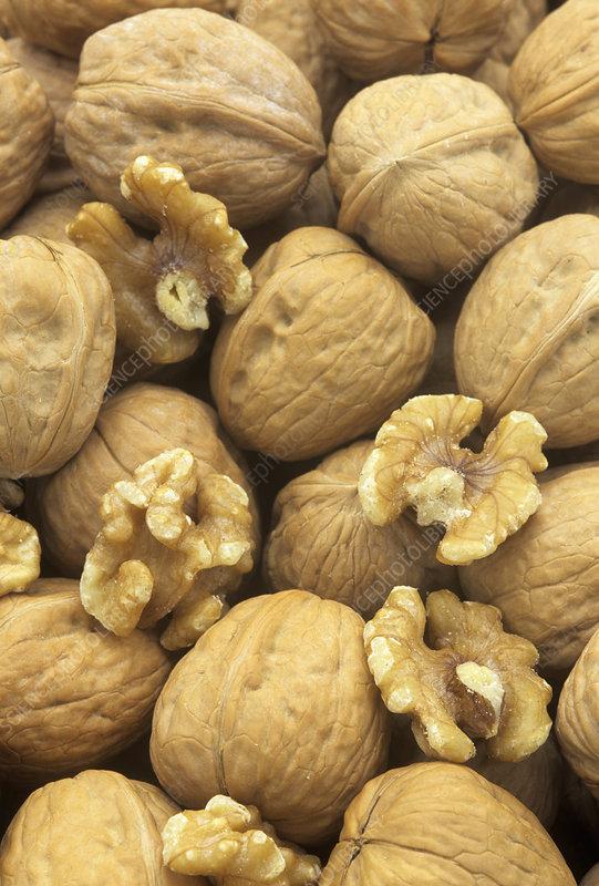 Nut, Walnut, Juglans regia