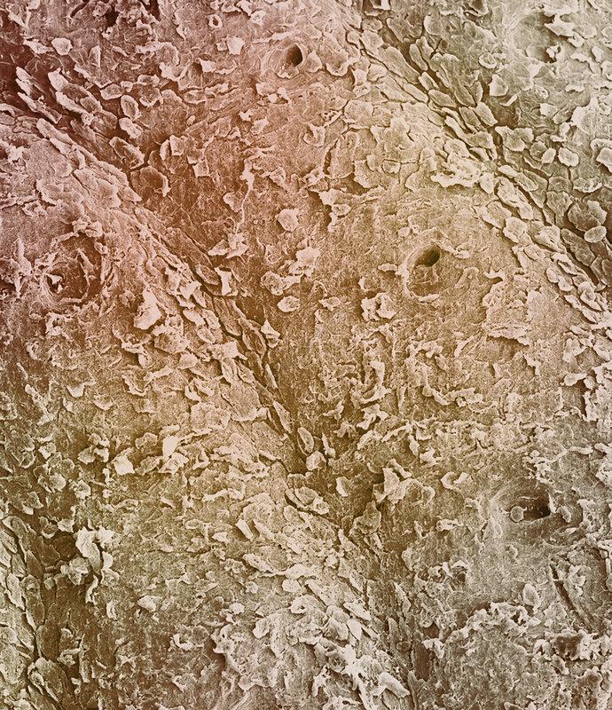 Human fingerprint ridges