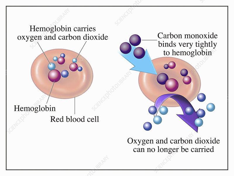 Carbon monoxide binding to hemoglobin