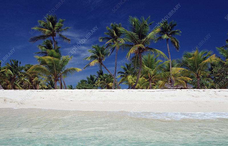 Sandy beach, Dominican Republic