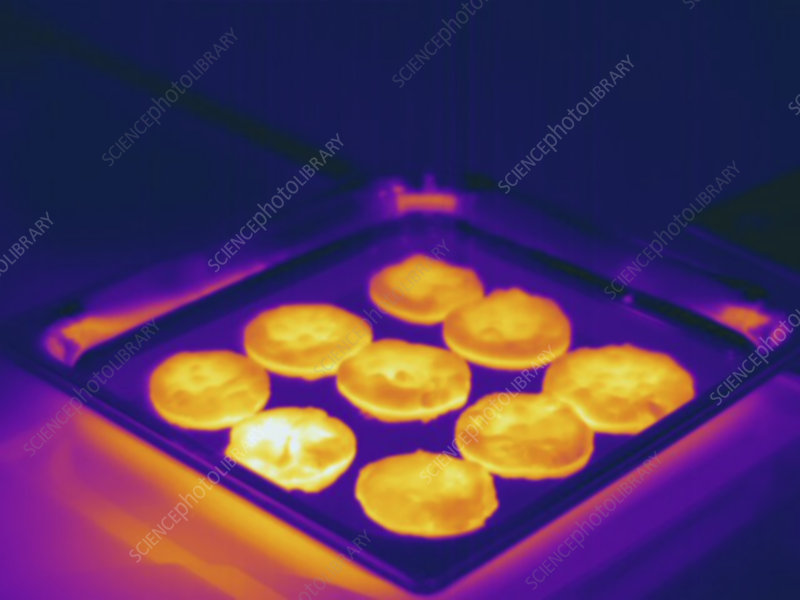 Thermogram - Hot cookies just out of the