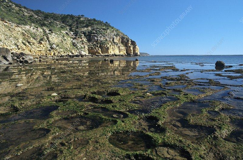 Inter-tidal shelf, Madagascar