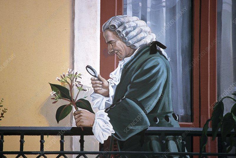 Antoine de Jussieu, French botanist