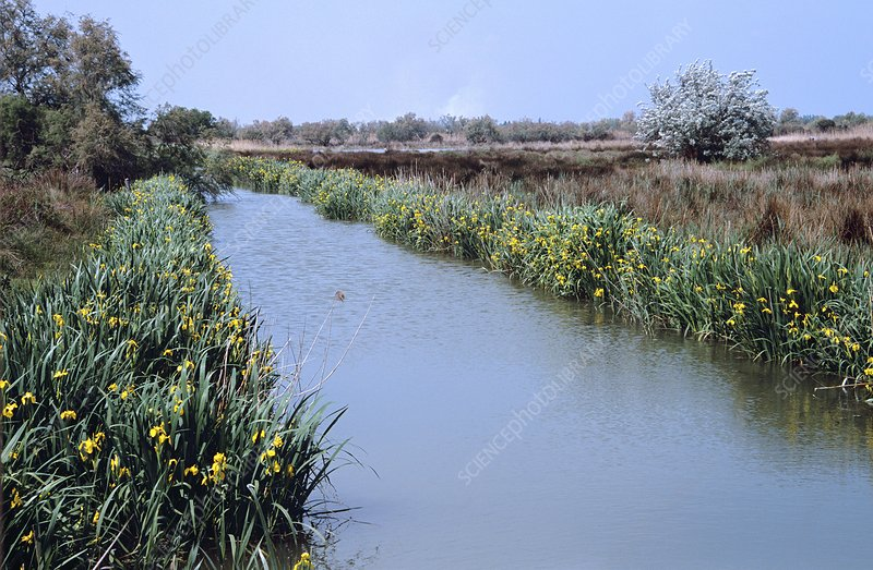 Irrigation channel, Camargue, France