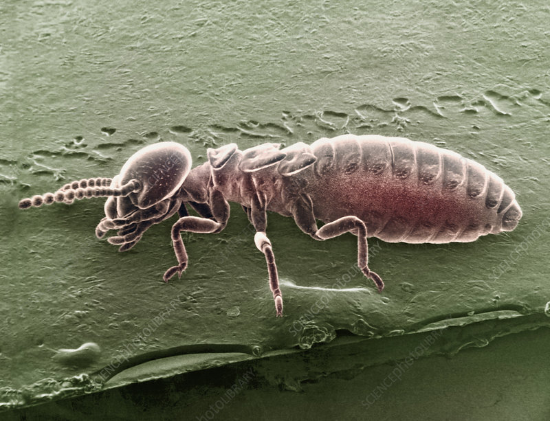 Parts of the Termite worker, SEM