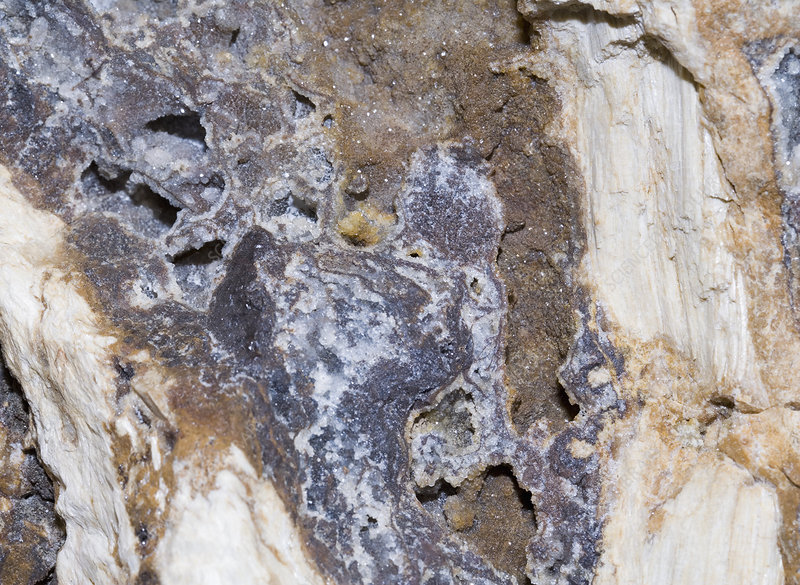 Drusy Quartz on silicified tree trunk
