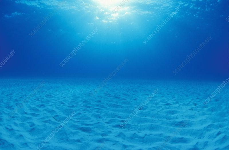 Shallow underwater sand plain
