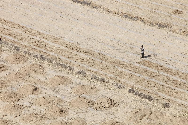 Farmer in dry, dusty farm field