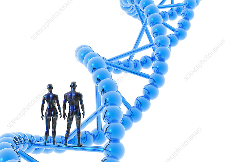 Male and female figures with DNA