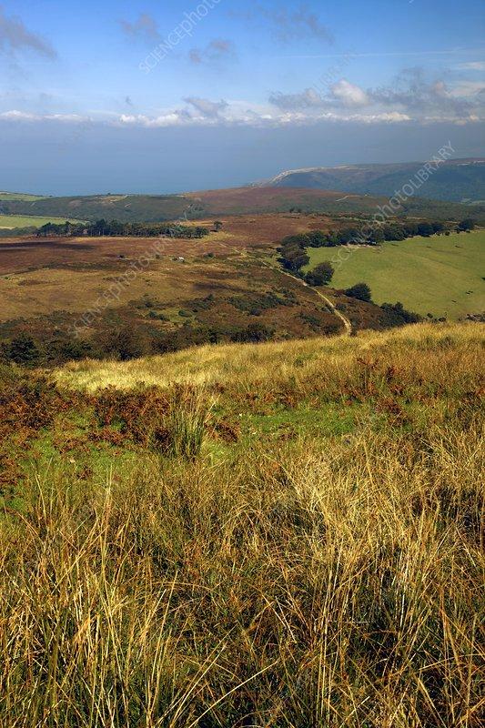Exmoor, Devon