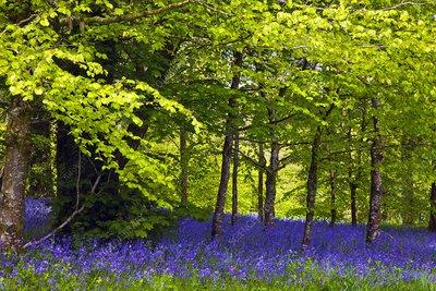 Cornwall Llanhydrock gardens