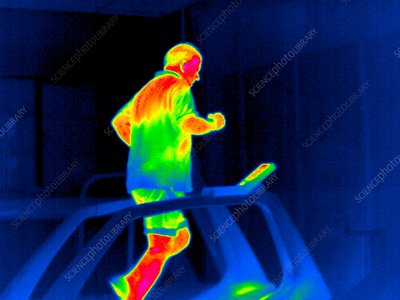 Treadmill exercise, thermogram