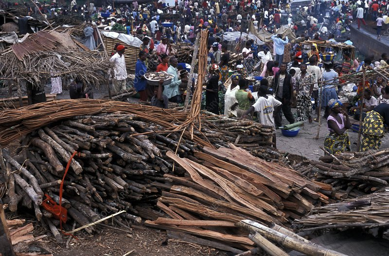 Congo woodcutting market