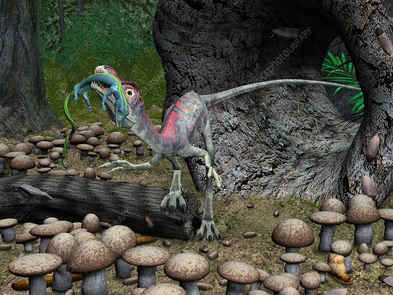 Compsognathus dinosaur, artwork