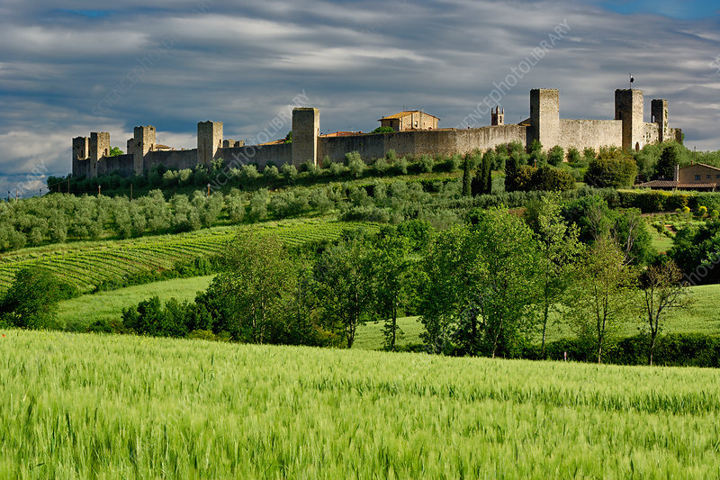 Wheat Field and Distant Monteriggioni