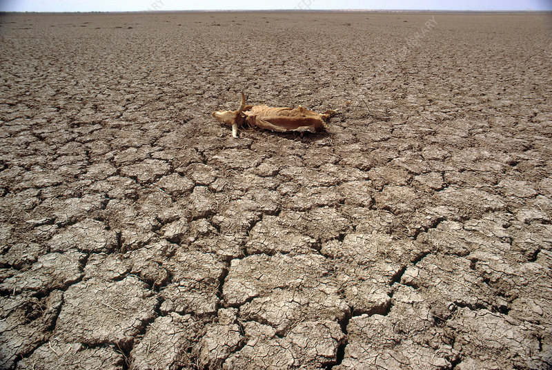 Drought in Niger