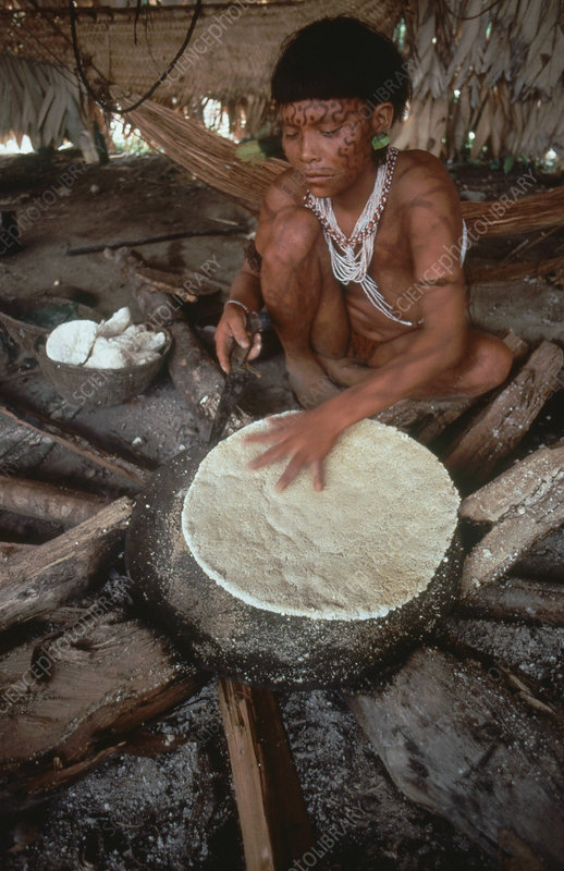 Yanomami Indian Baking Cassava Bread