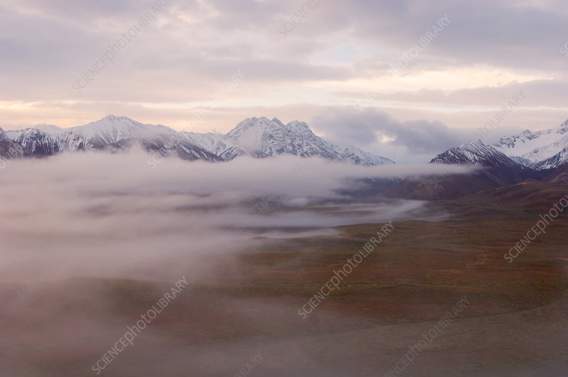 Fog in Denali National Park