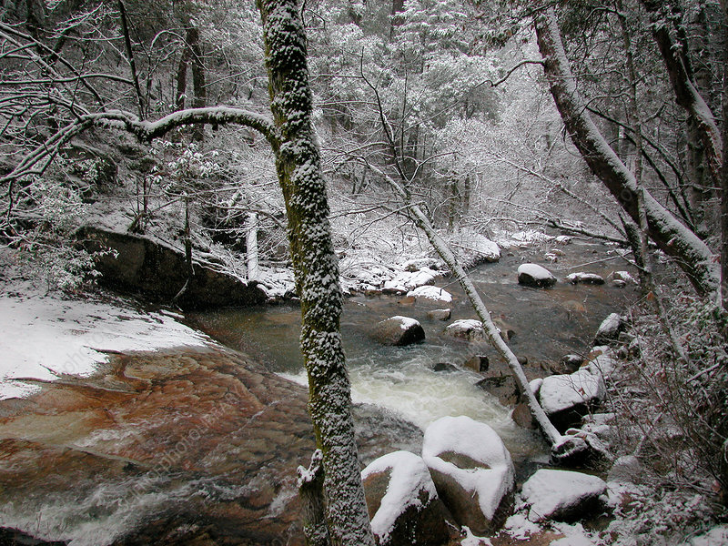 Berry Creek in winter