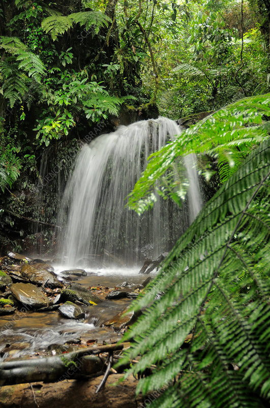 Vietnam rainforest