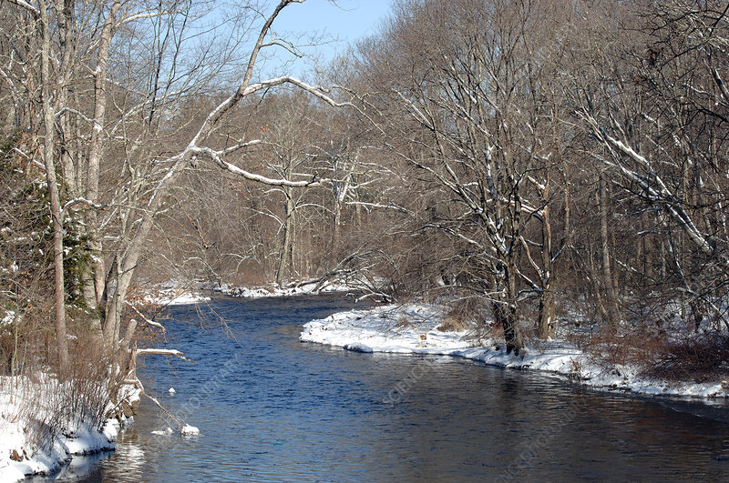 Willimantic River, Winter