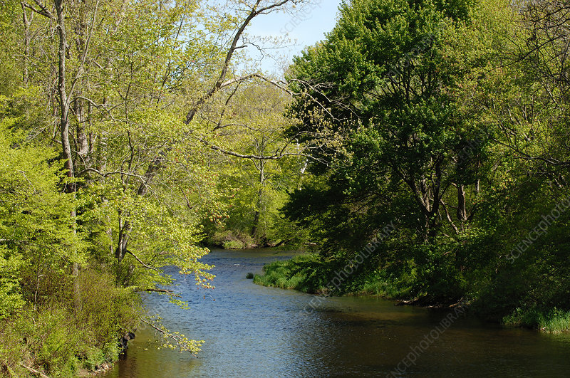 Willimantic River, Spring