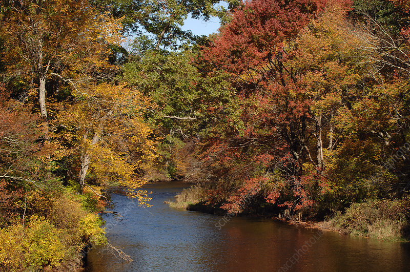 Willimantic River, Autumn