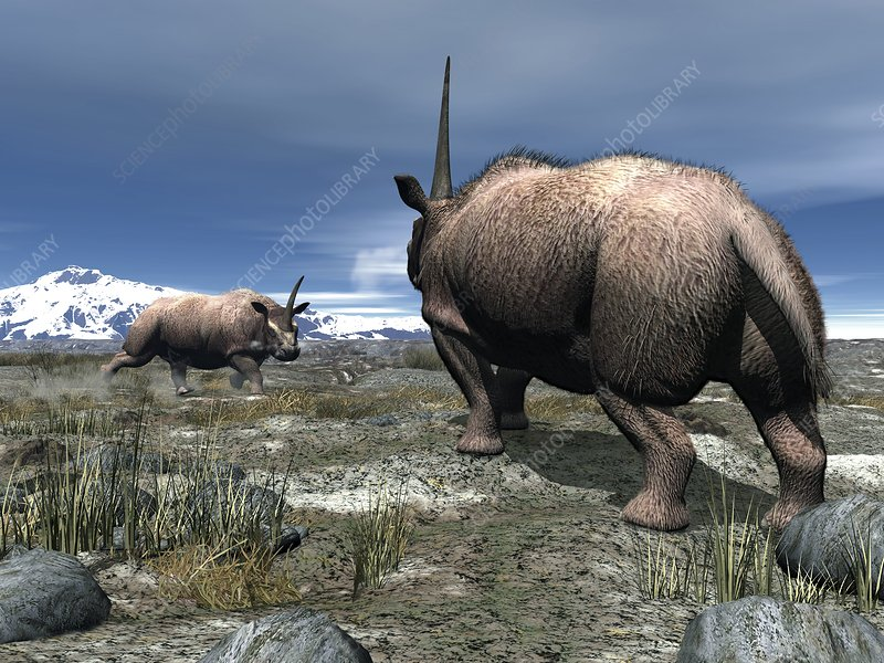 Elasmotherium, artwork