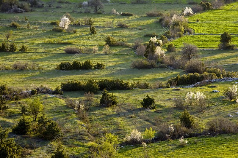 Old field patterns, Turkey
