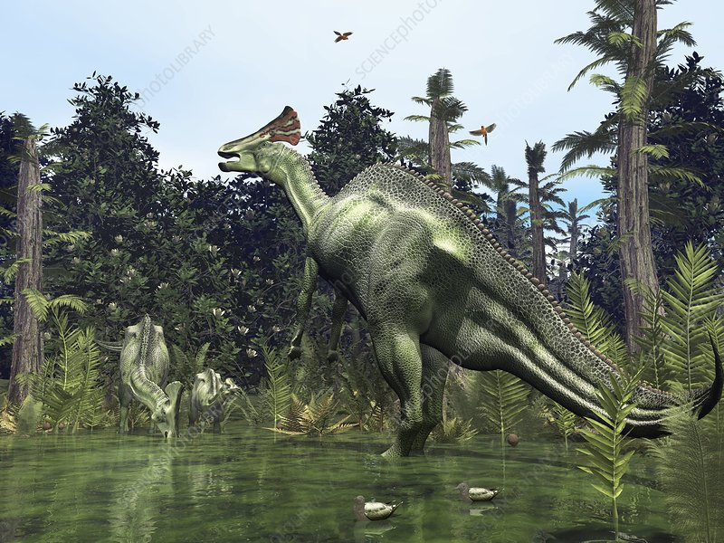 Lambeosaurus, artwork