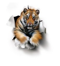Tiger, artwork