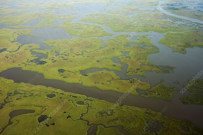 Coastal Louisiana wetlands