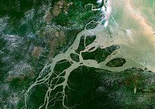 Amazon delta, satellite image