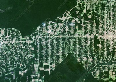 Deforestation in the Amazon, 2000