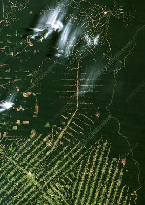 Deforestation in the Amazon, 1986
