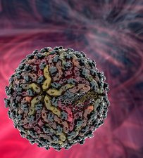 Dengue virus particle
