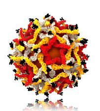 West Nile virus particle, molecular model