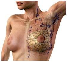 Breast lymphatic system, artwork