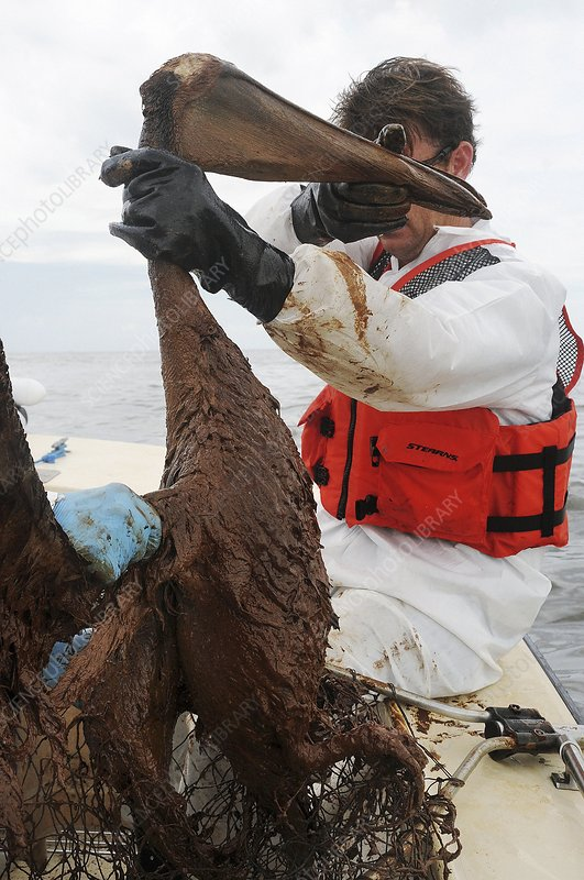 Gulf of Mexico oil spill rescue, 2010