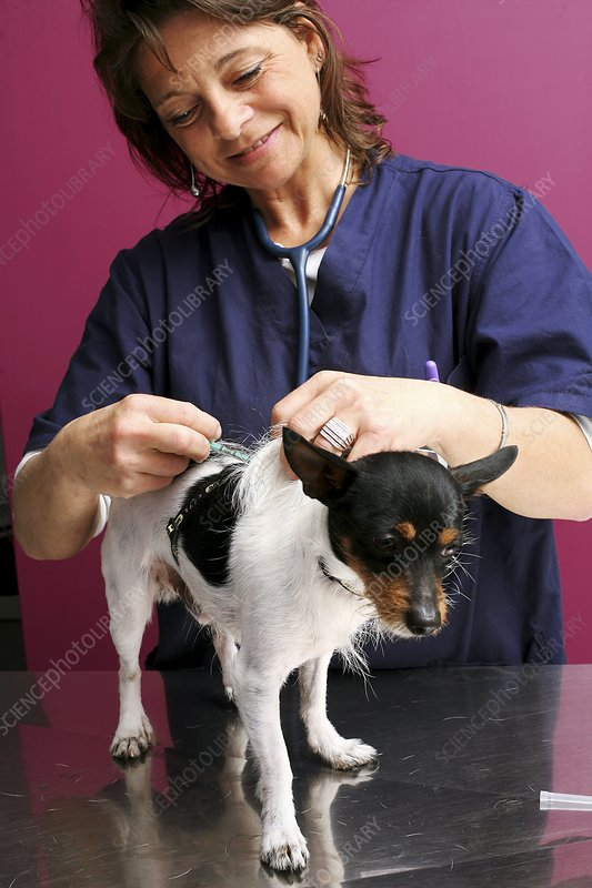 Vet treating a dog