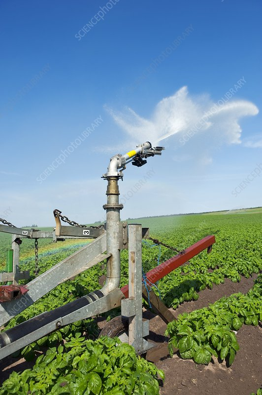 Potato field irrigation