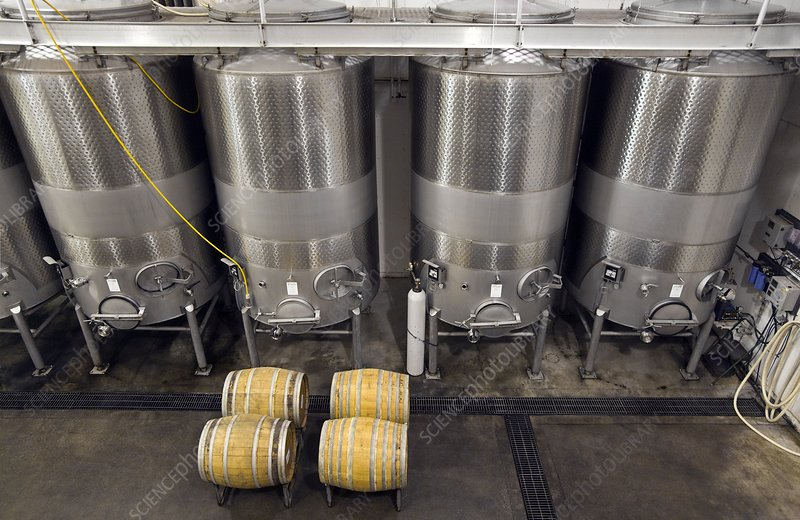 Wine tanks and barrels